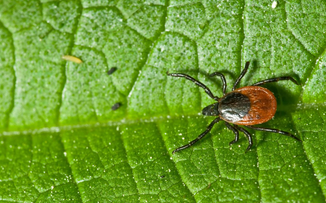 How Physical Therapy Can Help Patients With Lyme Disease
